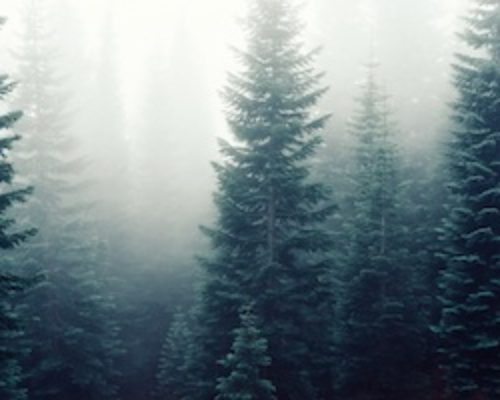http://www.evergreen-therapy.com/wp-content/uploads/2016/03/forest-trees-fog-foggy-500x400.jpg